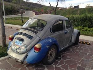 Käfer blau grau_2