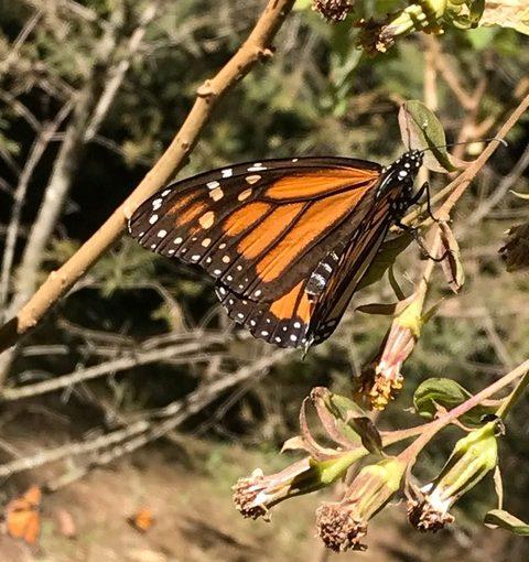 Tlalpujahua – zwischen Schmetterlingen und Weihnachtskugeln